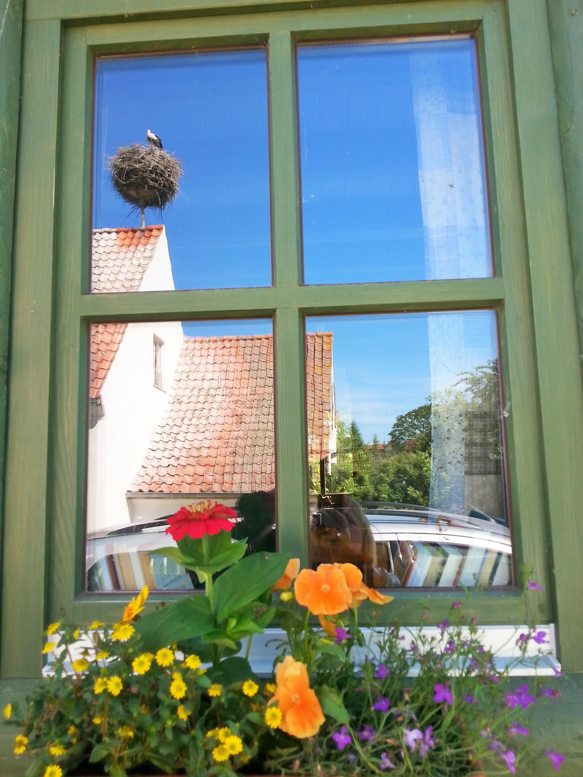 Bociany są naszą wiosenna i letnią codziennością, Mazury, Kal